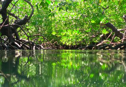 mangrove-work-banner